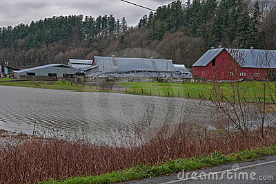 Flooded Dairy Farm Editorial Stock Photo