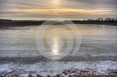 Flooded and frozen potato field.