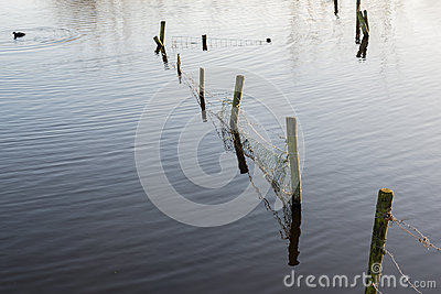 Flooded meadow with a fence