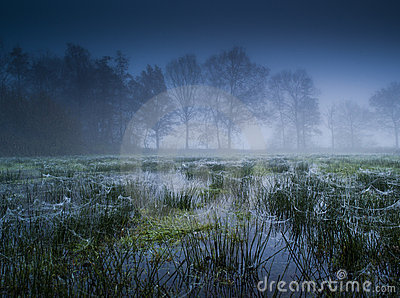 Flooded meadow with fog