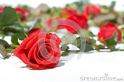 Floor Full of Roses