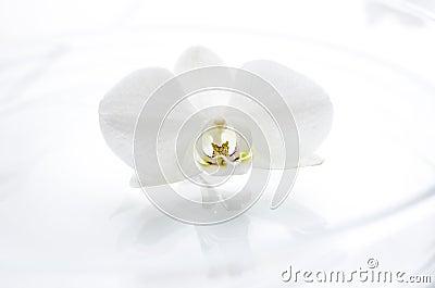 Flor da orquídea na água