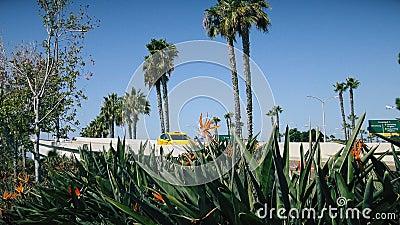 Flor de la ave del paraíso en el fondo de la carretera metrajes