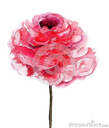 Flor de Rose