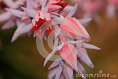 Flor del cacto