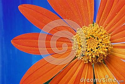 Flor e pétalas alaranjadas