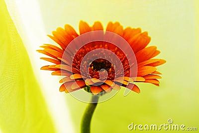 Flor estupenda