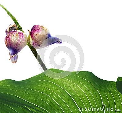 Free Flora Stock Photos - 10743643