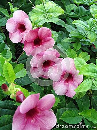 Flora abundant