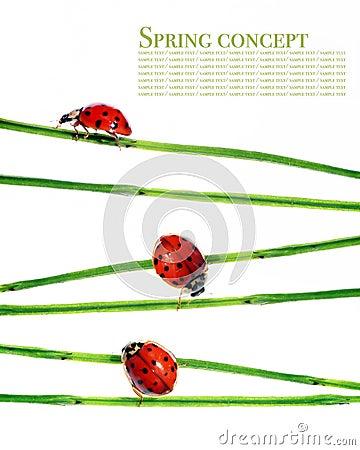 Free Flora And Ladybirds Stock Photos - 9257533