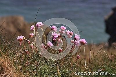 Flora costera y fauna