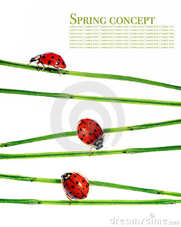 Flora and ladybirds