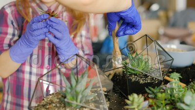 Floral διακόσμηση οικογενειακής επιχείρησης florarium Diy φιλμ μικρού μήκους