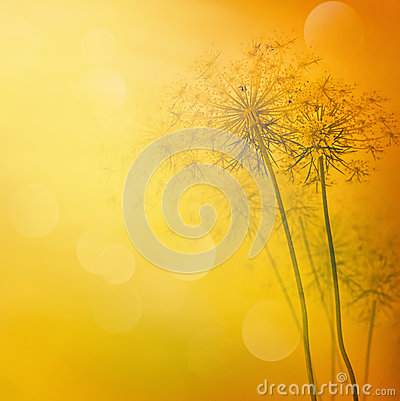 Free Floral Abstract Background Stock Images - 24756154