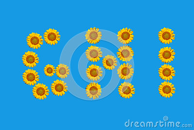 Floral alphabet made from flowers of sunflower.