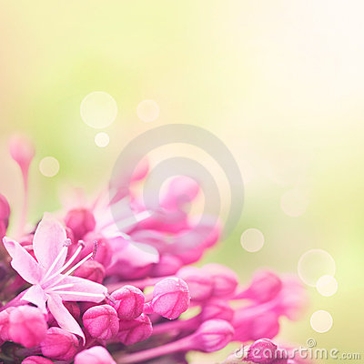 Free Floral Background Royalty Free Stock Photography - 20620807