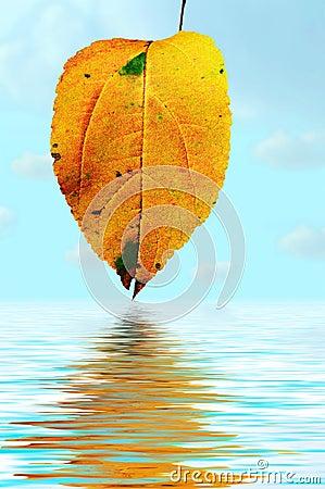 Free Floral Background Autumn Tints Stock Photo - 2149560