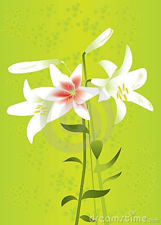 Floral background with lilies