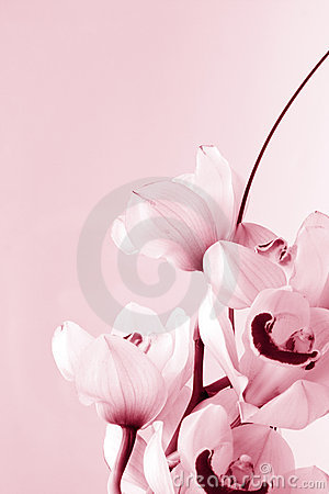 Free Floral Background: Orchid Love Stock Photos - 3901623