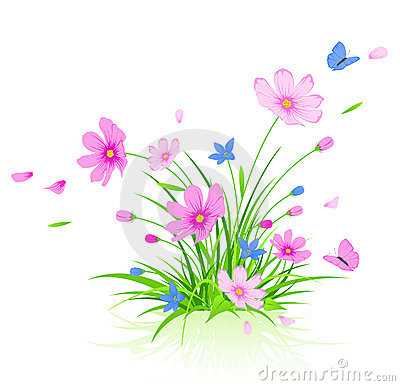 floral background with red cosmos flowers