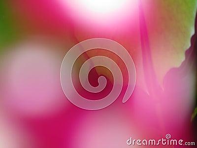 Floral Blurs
