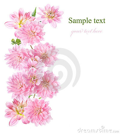 Floral border with pink Dahlia