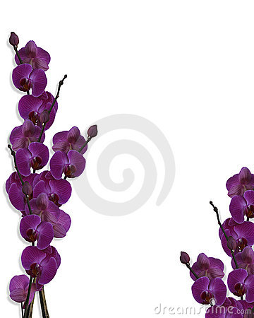 Free Floral Border Purple Orchids  Stock Photo - 8262620