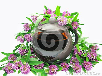 Floral clover tea in teapot