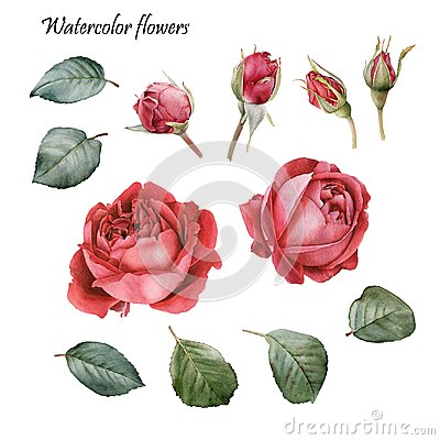Free Floral Design Elements. Flowers Set Of Watercolor Red Roses Royalty Free Stock Photo - 104132585