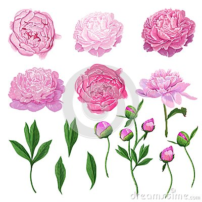 Free Floral Elements Set With Pink Peony Flowers, Leaves And Buds. Hand Drawn Botanical Flora For Decoration, Wedding Royalty Free Stock Photo - 112999075