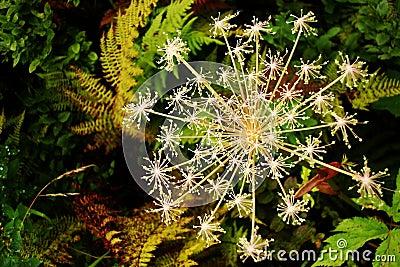 Floral flake