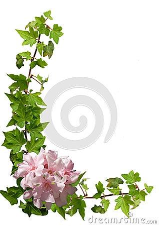 Floral frame - ivy, oleander