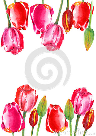 Floral frame of a tulip flowers. Cartoon Illustration