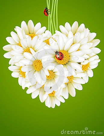 Free Floral Love Card (camomile Heart) Stock Photos - 14122373