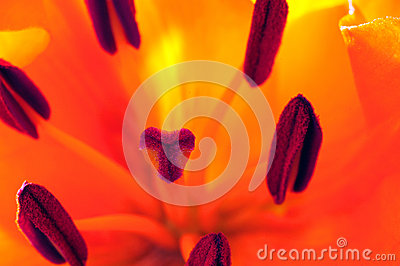 Floral Macro Arrangement