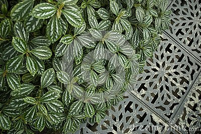 Floral pattern and metal ornament