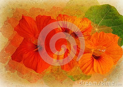 Floral picture with patina texture
