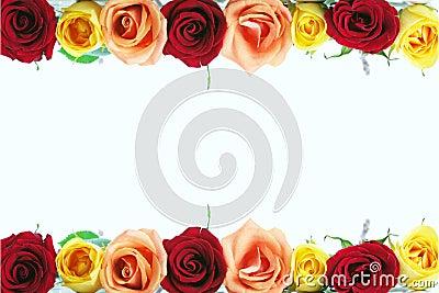 Floral rose border