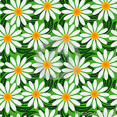 Floral seamless pattern with Chamomiles.