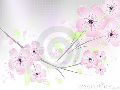 Floral spring background - cherry blossoms