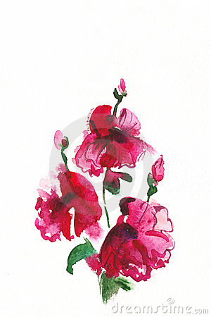 Floral watercolor illustration.