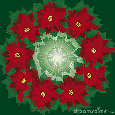 Floral wreath of poinsettia