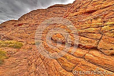Flore antique de mer en stationnement national des Rois Canyon