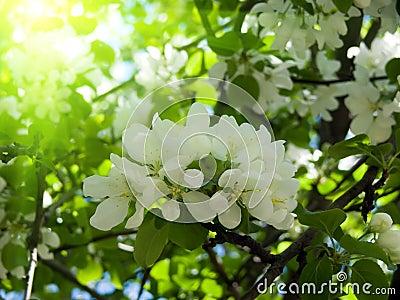Florece el manzana-árbol del árbol