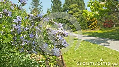 Floresça no parque verde com fundo 4K do borrão video estoque