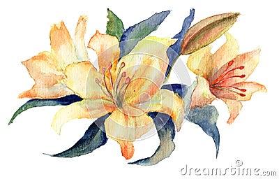 Flores amarelas do lírio