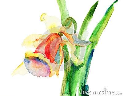 Flores do narciso