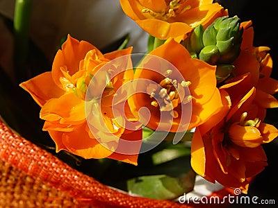 Flores anaranjados en un crisol