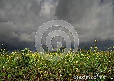 Flores antes de la tempestad de truenos