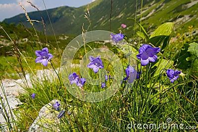 Flores Azuis Nas Montanhas